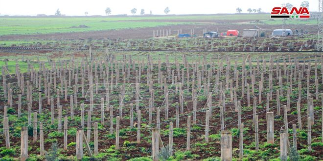 Daraa Agriculture Department plans to produce 82,000 fruit tree saplings