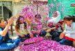 """Comienza la cosecha de la """"Rosa de Damasco"""", patrimonio intangible de la humanidad y la embajadora de Siria al mundo"""