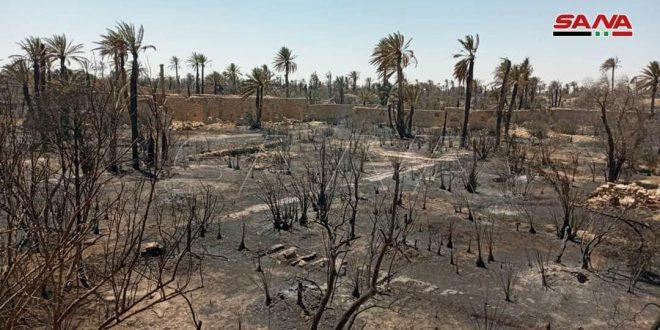 Fotos: nuevo incendio en el Oasis Histórico de Palmira es extinguido por los bomberos