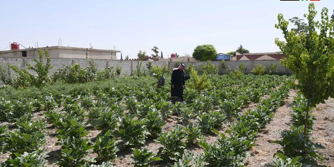 Miles de familias sirias se benefician del Proyecto de Apoyo a la Agricultura Familiar