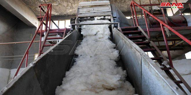 Siria prevé producción de 98 mil toneladas de algodón