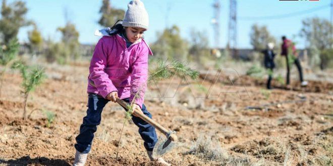 Campaña de reforestación en las afueras de Damasco (+fotos)