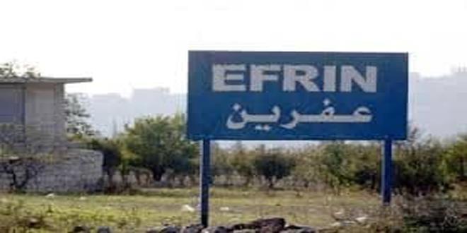Terroristas proturcos cortan los olivos en el ocupado municipio sirio de Efrín
