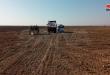 Les agriculteurs reprennent la culture du blé et de l'orge dans la zone de Bayarat Gharbiya dans le désert de Palmyre