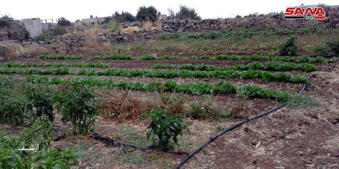 Огородорство — проект малого семейного бизнеса в провинции Дараа