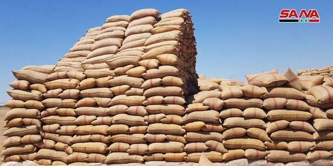 В провинции Алеппо продолжается восстановление зернохранилищ
