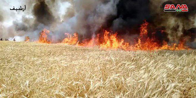 В провинции Хасаке огонь уничтожил 800 донумов посевов пшеницы и ячменя