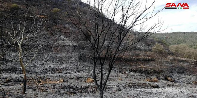Сельскохозяйственный кооперативный банк выдаст пострадавшим от пожаров беспроцентные кредиты