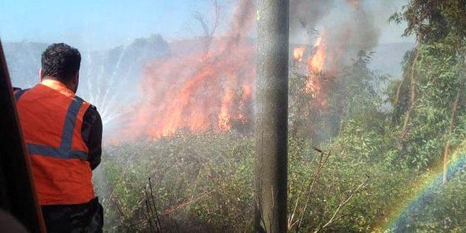 На западе провинции Хомс вблизи селения Шин потушен пожар
