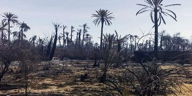 Authorities extinguish the mass fire that erupted in Palmyra Oasis