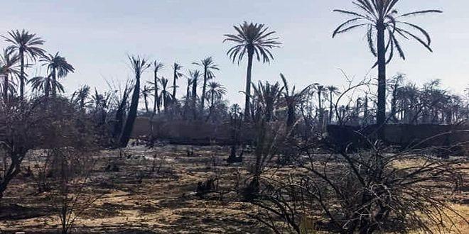 200 hectáreas de palmeras han sido quemadas en el incendio del Oasis de Palmira