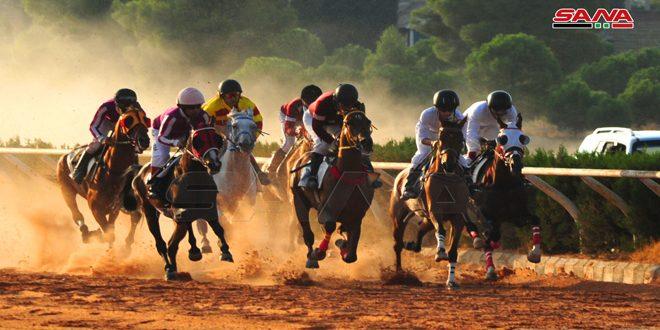 Cuarta carrera de caballos de raza árabe
