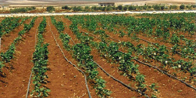 توزیع سه هزار سیستم آبیاری قطره ای میان زنان روستایی توسط اداره کشاورزی حمص