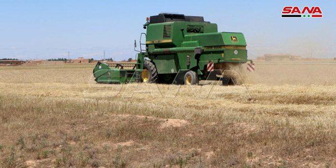 مؤسسه غلات سوریه تدارکات لازم برای بازاریابی محصولات گندم را به پایان رساند
