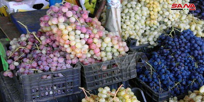 آغاز برداشت انگور در استان سویداء