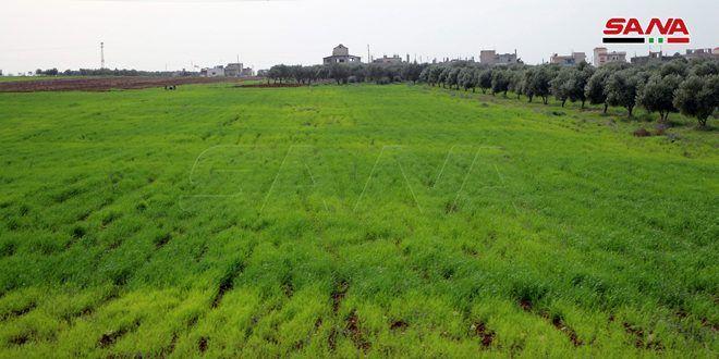 موسسه عمومی تكثیر بذر: طرح کاشت /80/ هزار دونوم از مزارع گندم در حسکه