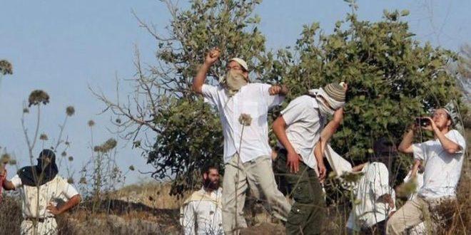 "یورش شهرک نشینان اسرائیلی روستای ""قریوت"" واقع جنوب نابلس"