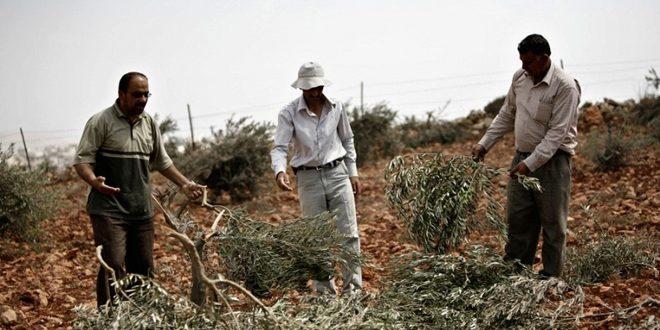 מתנחלים ישראלים תקפו שטחים פלסטיניים בדרום בית לחם