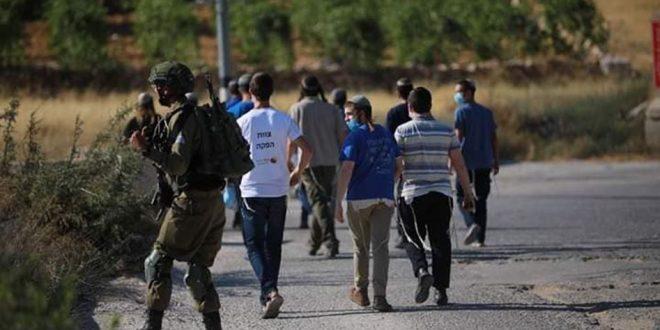 מתנחלים תקפו שטחים פלסטיניים במערב בית לחם