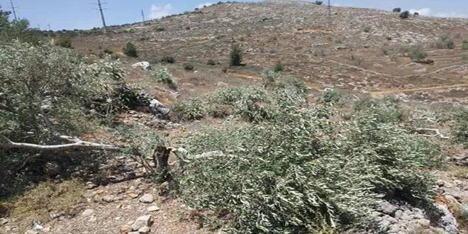 הכוחות הישראליים גרפו את אדמות הפלסטינים דרומית לבית לחם