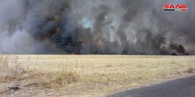 Террористы складируют награбленный урожай зерновых на своих элеваторах в Аль-Джазире