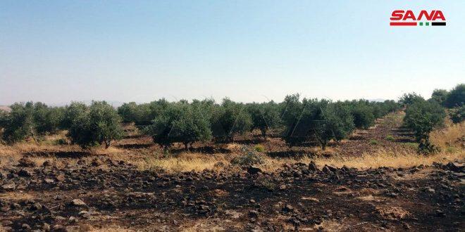 В Кунейтре потушены два пожара на территории пастбища и в лесном массиве