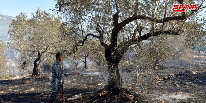 В районе Аш-Шейх Саад провинции Тартус потушен пожар