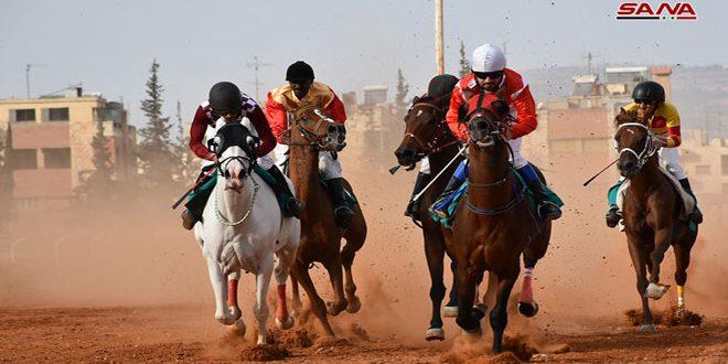 مشاركة واسعة ومنافسات قوية في سباق الخيول العربية الأصيلة السابع بحماة
