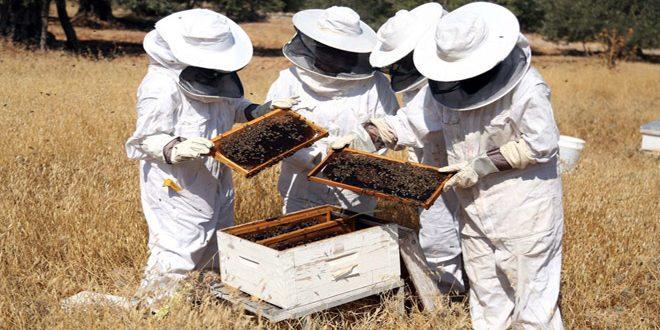 تعاف تدريجي لقطاع تربية النحل في سورية