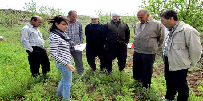 المدارس الحقلية في السويداء.. تحسين الإنتاج وتعريف المزارعين بطرق مكافحة الأمراض