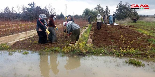 زراعة القنيطرة: إنتاج 825 ألف عقلة من الأشجار المثمرة