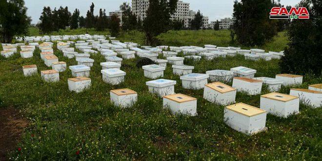 توزيع 360 خلية نحل مع مستلزماتها في حمص