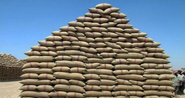 الأول من حزيران المقبل موعد استلام القمح من الفلاحين في حماة