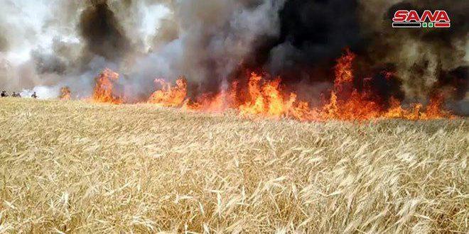 تضرر نحو 3600 دونم من محصول الشعير في الحسكة جراء الحرائق