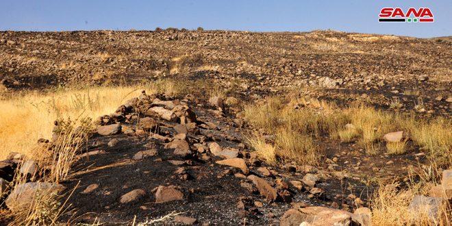 إخماد حريق نشب في مئات الدونمات من الأراضي الزراعية والحراجية شمال بلدة قنوات بالسويداء