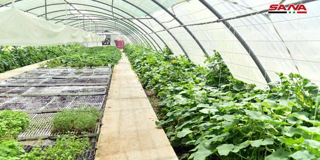 مركز لإنتاج الشتول المحمية في كلية الزراعة بجامعة دمشق