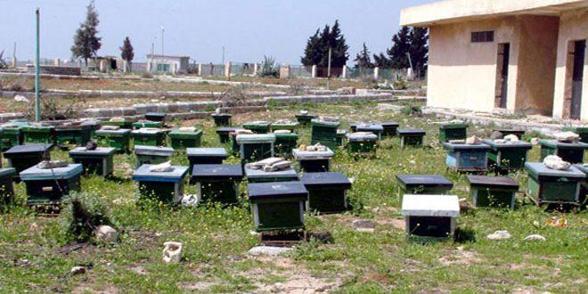إنتاج حماة يتجاوز 230 طناً من العسل الصافي