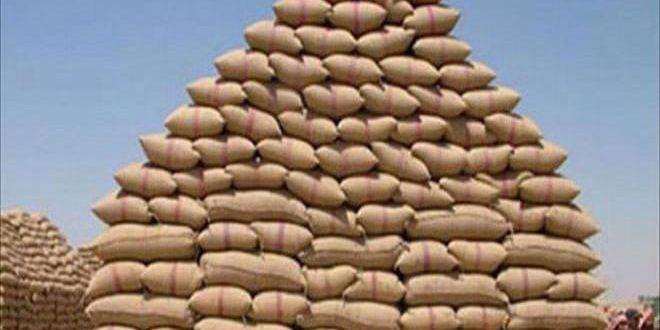 تخصيص ثلاثة مليارات ليرة دفعة أولى لصرف قيم موسم الحبوب في حماة