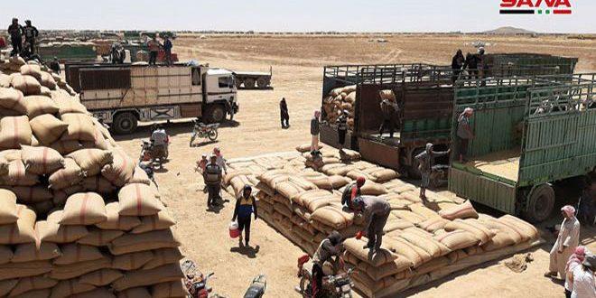 صرف نحو 15 مليار ليرة من قيم القمح والشعير المسوقين في الحسكة