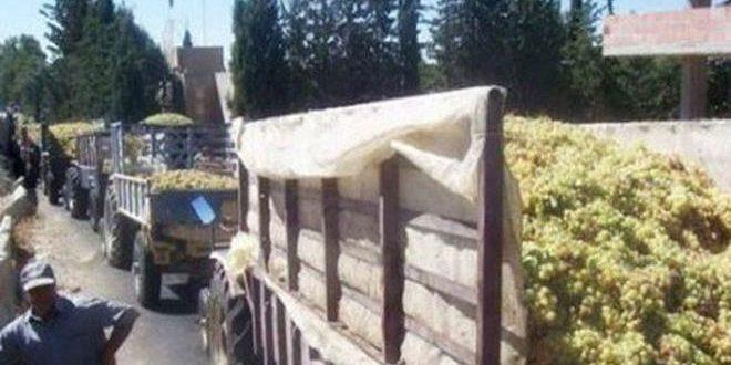 الصناعة تحدد سعر شراء العنب العصيري للموسم الحالي بـ 125 ليرة