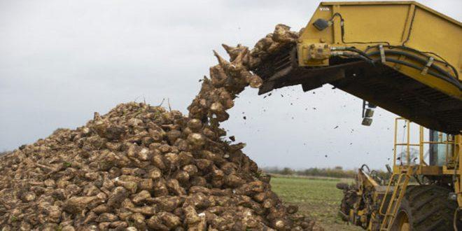 شركة سكر تل سلحب تستلم 9100 طن من الشوندر السكري