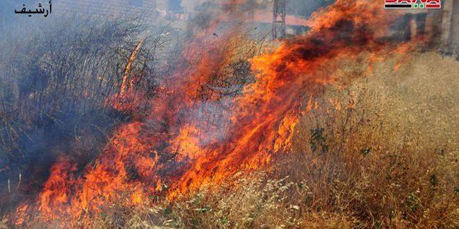 حريق يلتهم مئات الأشجار المثمرة في منطقة الزبداني