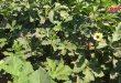 زراعة الخضار الصيفية تتصدر قائمة اهتمام الفلاحين في الحسكة