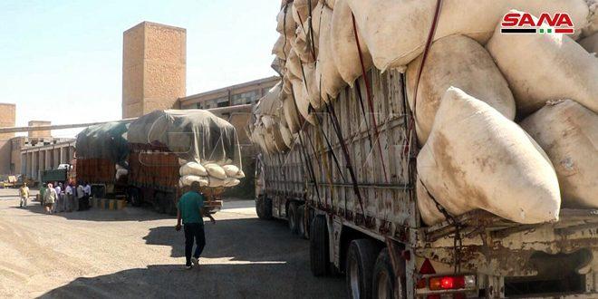 19 ألف طن إنتاج القطن في الحسكة