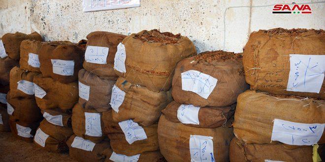 انتهاء عمليات استلام محصول التبغ في درعا
