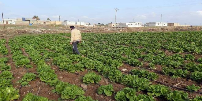مشروع الحدائق المنزلية لزراعة الخضار يستهدف 1500 عائلة في محافظة الحسكة