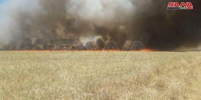 اتحاد تشيكي: إحراق قوات الاحتلال الأمريكي للمحاصيل الزراعية في سورية جريمة حرب