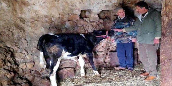 22 مليون ليرة قيمة القروض التي منحها مشروع تطوير الثروة الحيوانية بحمص خلال ستة أشهر