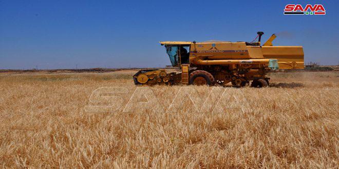زراعة السويداء:34 ألف هكتار من الأراضي قابلة للاستثمار الزراعي