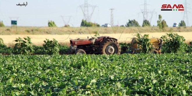 قروض المصرف الزراعي في حماة ساعدت بدعم الإنتاج الزراعي وتوسيع المشاريع